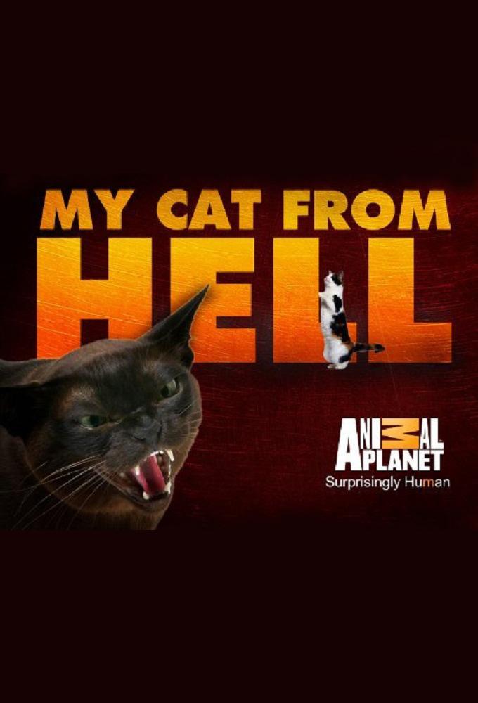 адские кошки смотреть онлайн в хорошем качестве 720