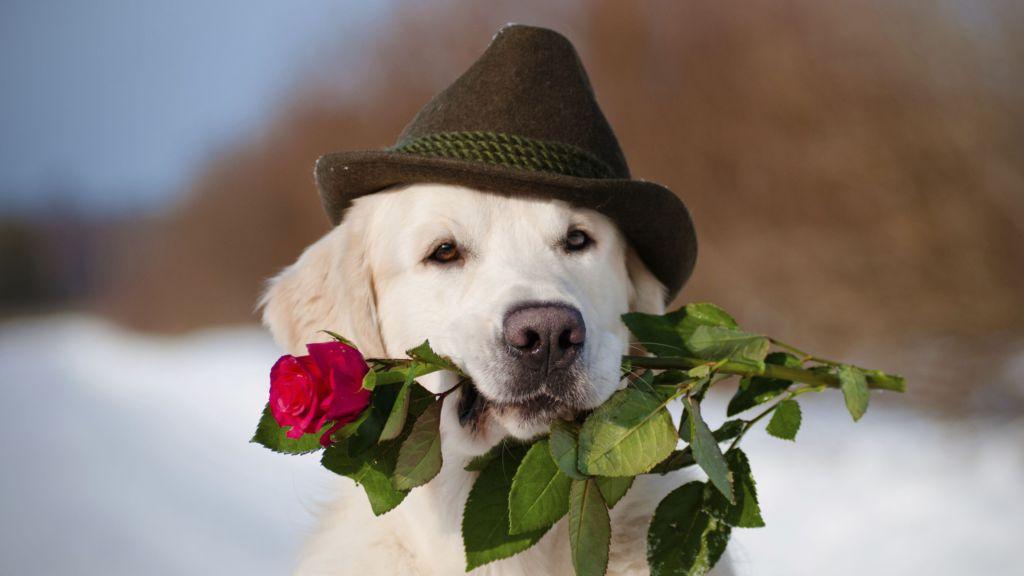 Фото собачки с цветами в зубах