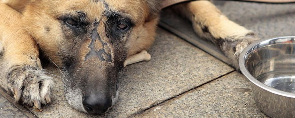 How to Identify Animal Abuse and Neglect forecasting