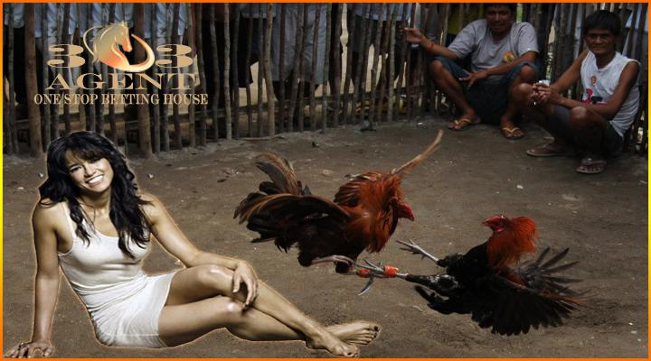 sabung ayam pisau filipina dating sites