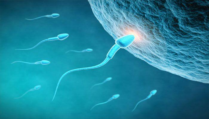 srok-zhizni-spermatozoidi