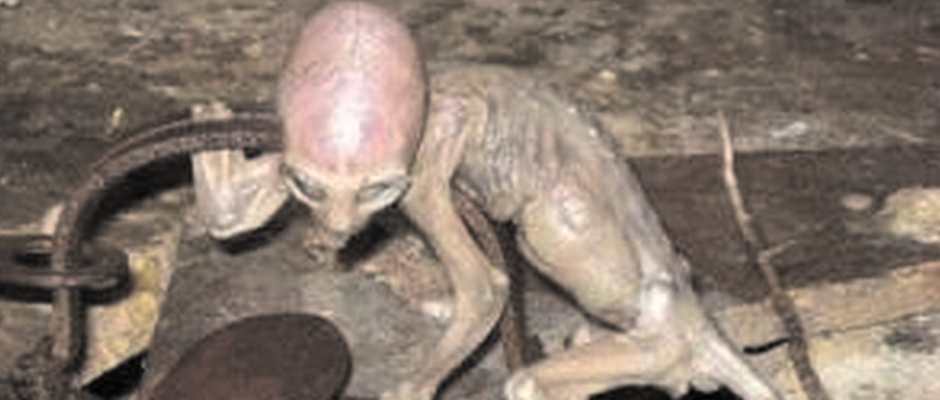 Baby Alien Found in Mexico: Real or Hoax?  Real