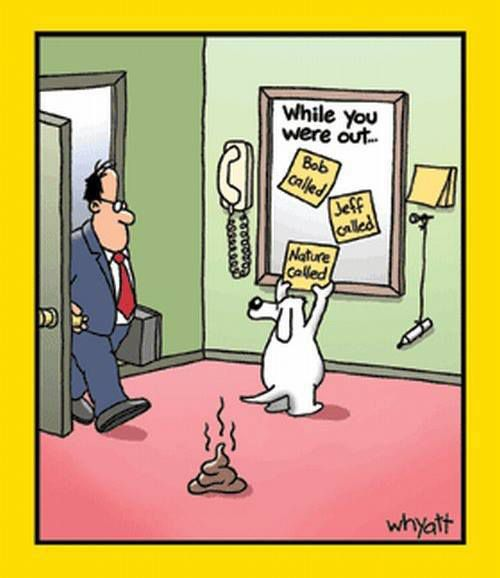 funny dog cartoon funny dirty adult jokes memes amp pictures
