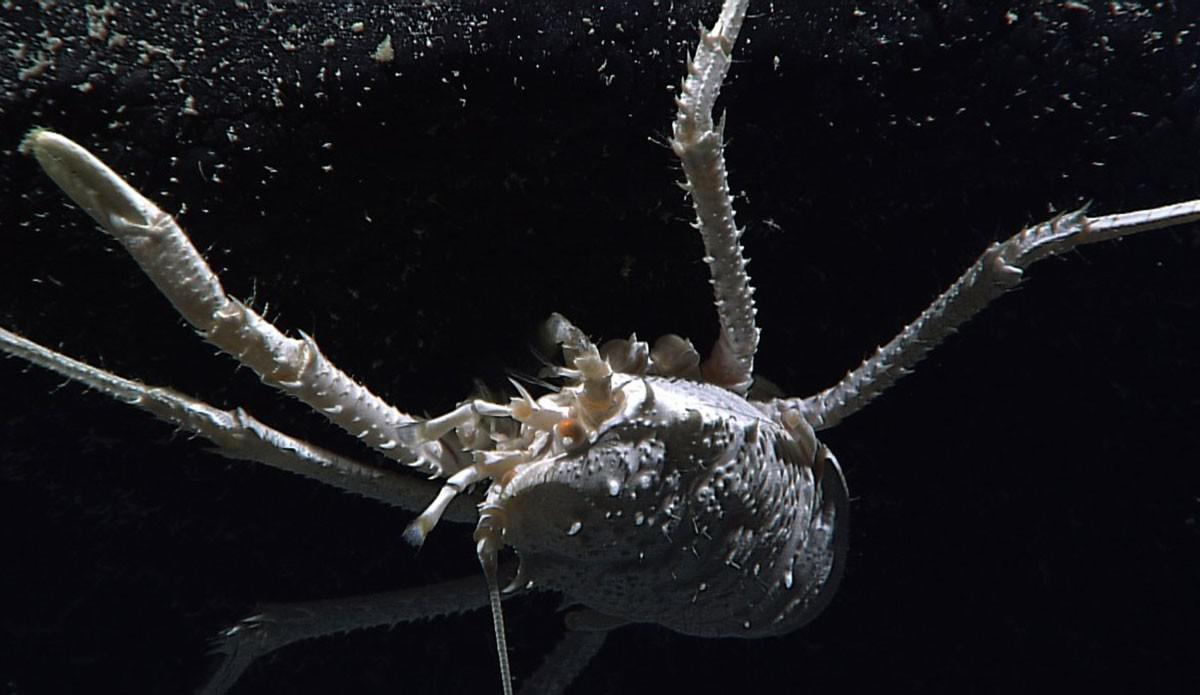 top 15 unusual deep sea creatures listverse