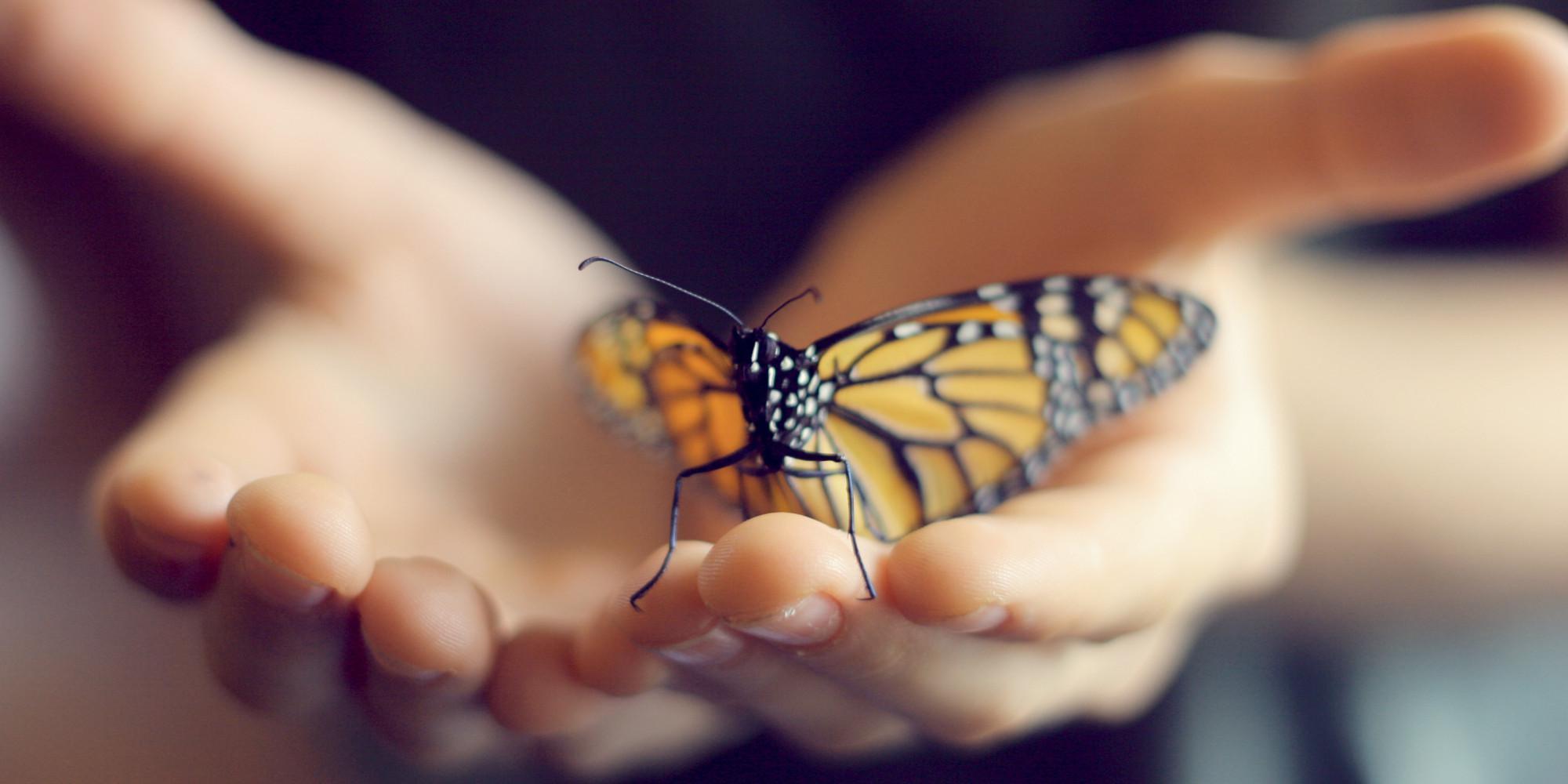 Бабочки в руках картинки, букетами день
