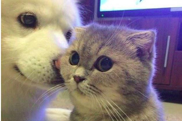 Cute Picture Of Cats And Dogs