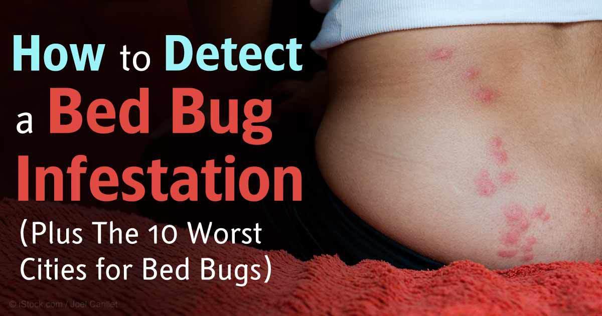 Mercola Bed Bugs