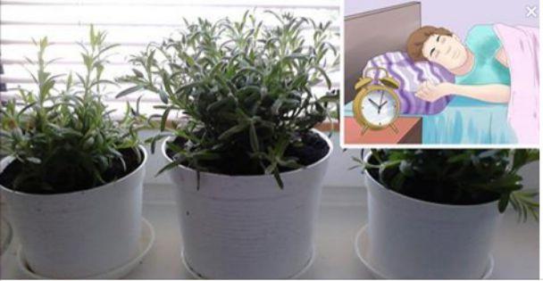 Insonnia le 5 piante da tenere in camera da letto per - Piante che purificano l aria in camera da letto ...