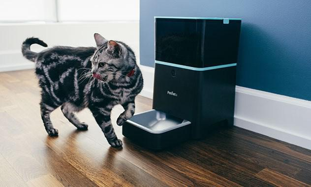 8 Best Automatic Cat Feeder Reviews