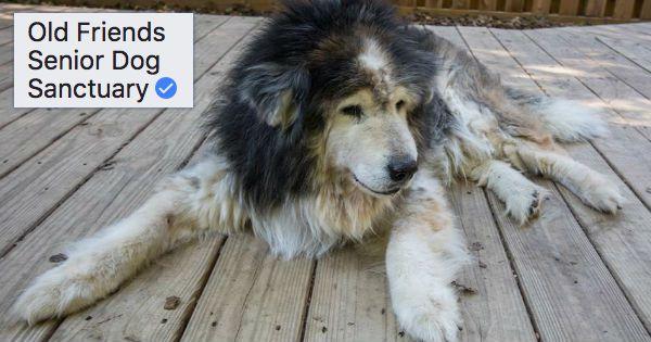 Old Friends Senior Dog Sanctuary