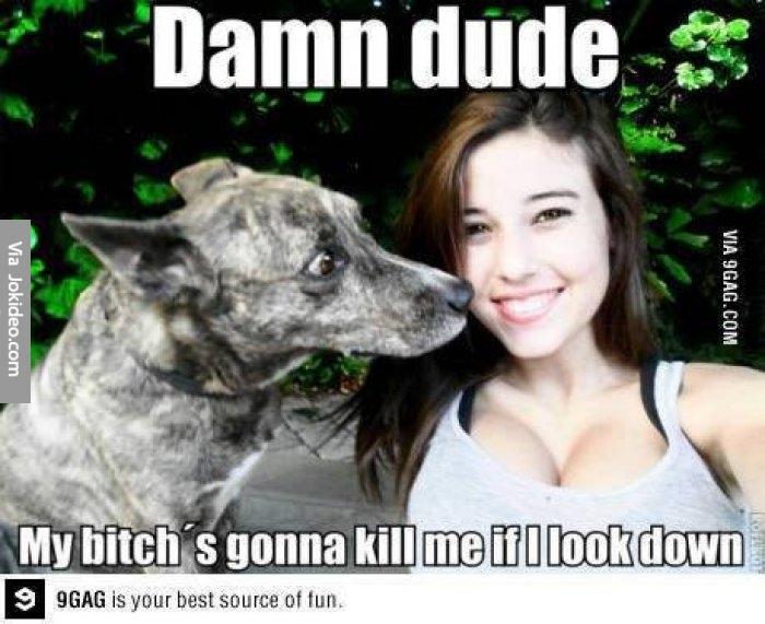 Dog Show Jokes
