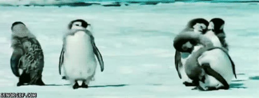Смешные гифки пингвины