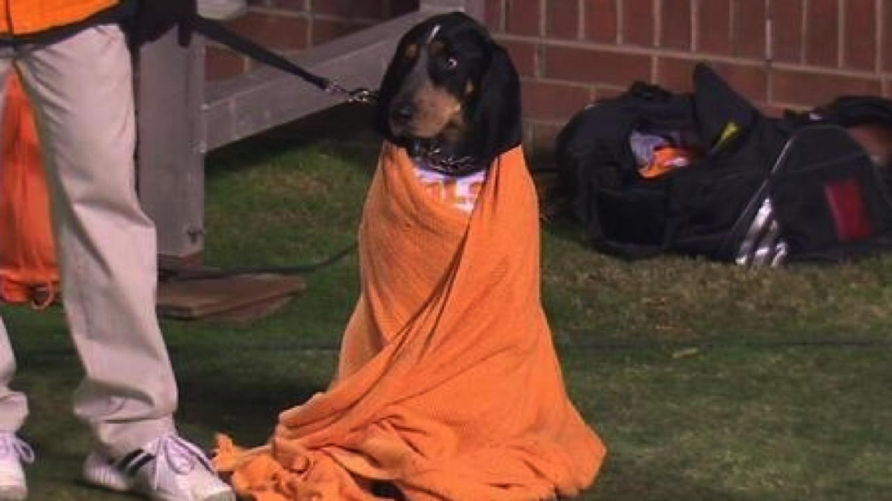 volunteers mascot smokey the dog snuggles in blanket  is
