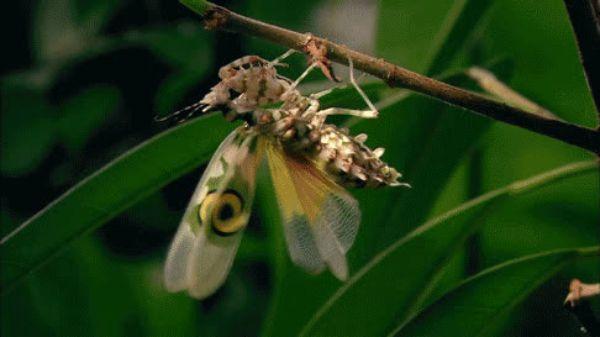 Оружие прикол, насекомые гифка