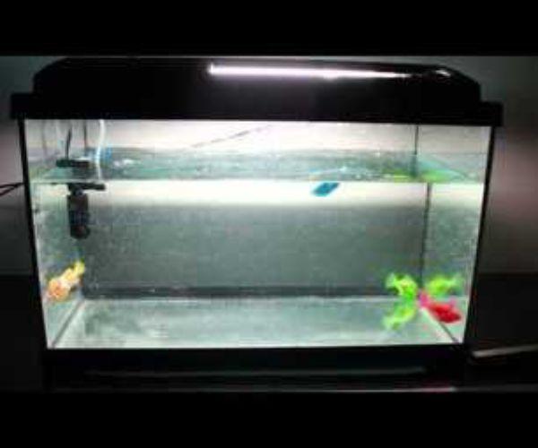 Robotic fish tank driverlayer search engine for Robo fish tank
