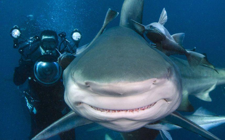 Акулы картинки приколы