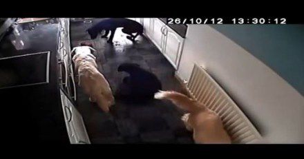 Watch What Happens When Dogs Are Left Home Alone With A