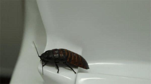 Гифка тараканы бегают