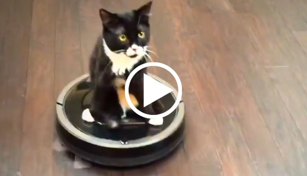 how to get a cat out of heat fast