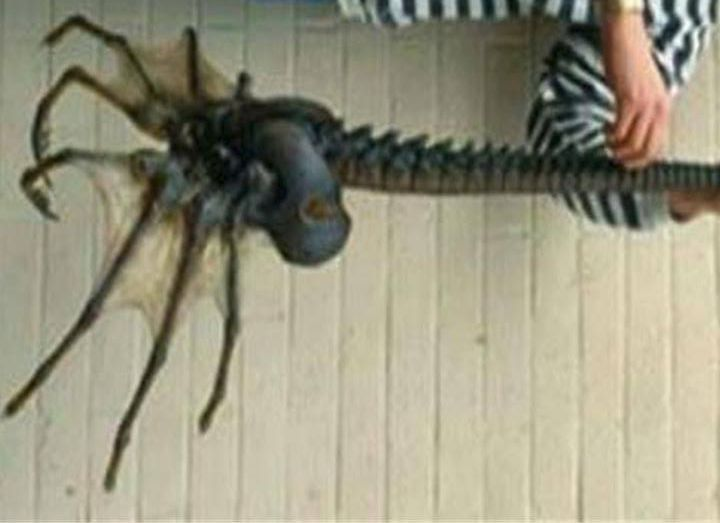 Photo of Giant Antarctic Sea Spider: Real or Fake?