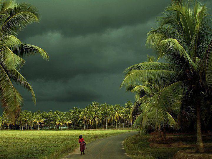 Kerala Tour Package Enjoy Natural Beauty Of Kerala