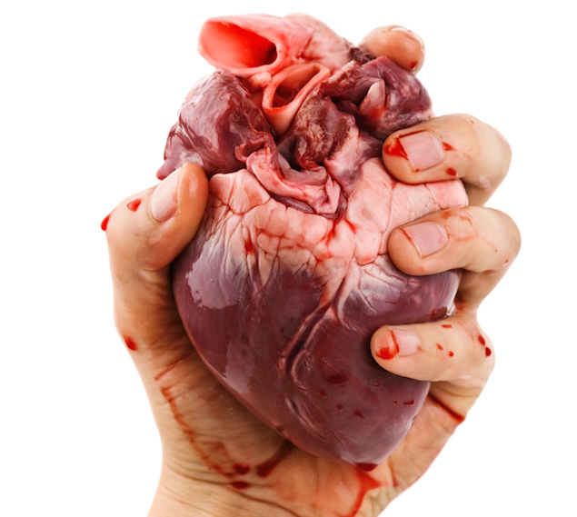 essay on human heart