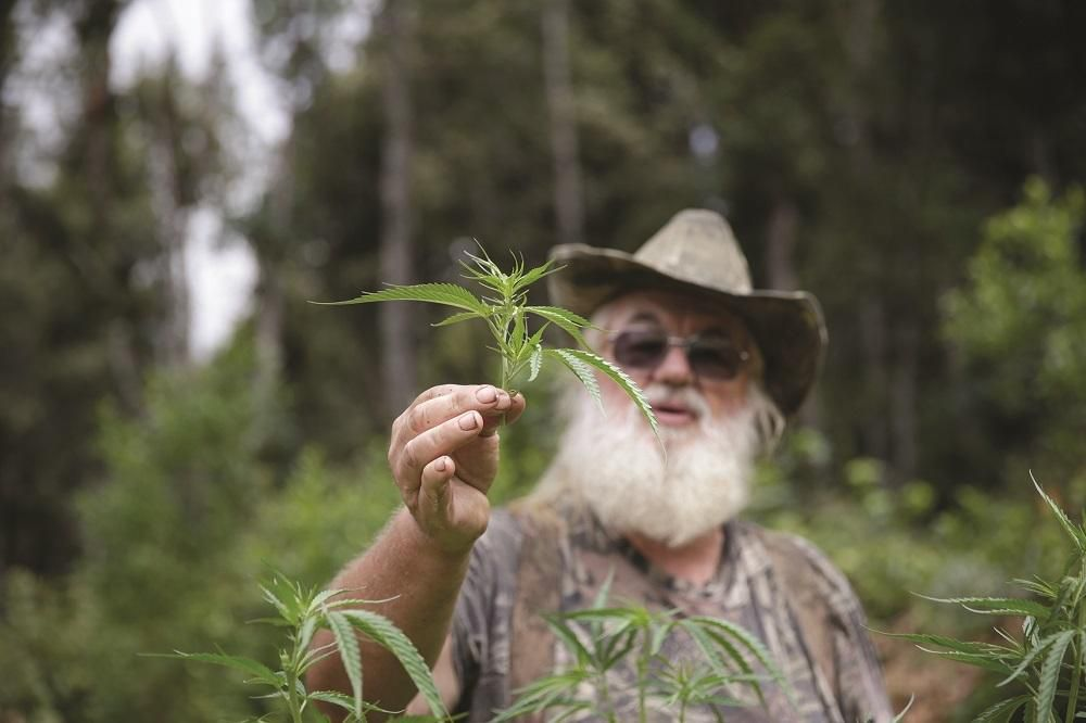 Weed (CA) United States  City new picture : War in Weed Country | VICE | United States