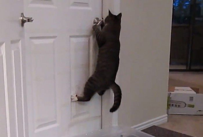 Houdini Cat Not Even Doors Can Keep Him Locked In