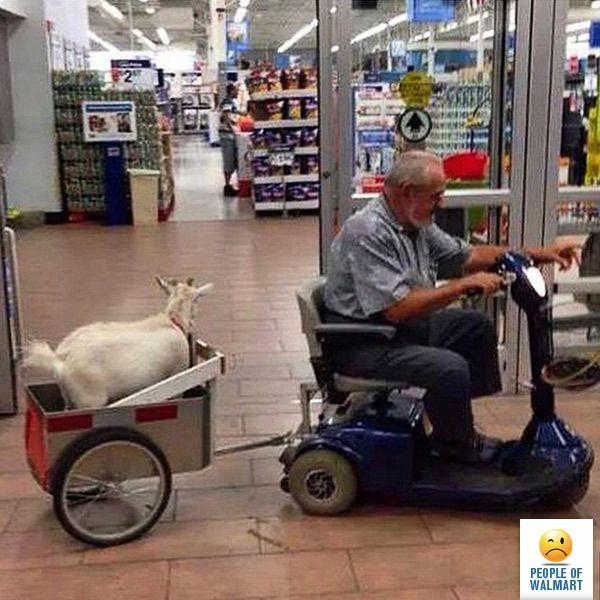 Free Goat Rides People Of Walmart