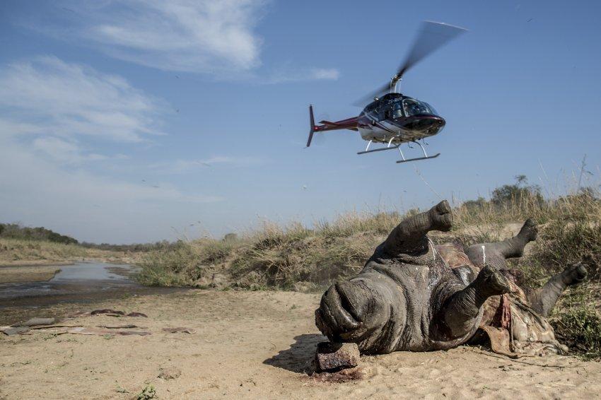 богов картинка на тему браконьерство в пустыне ответ