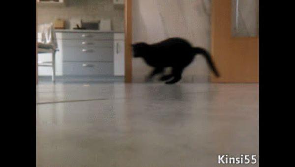 гифка кот убегает проведением замеров