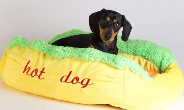 Best Dog Bed Ever