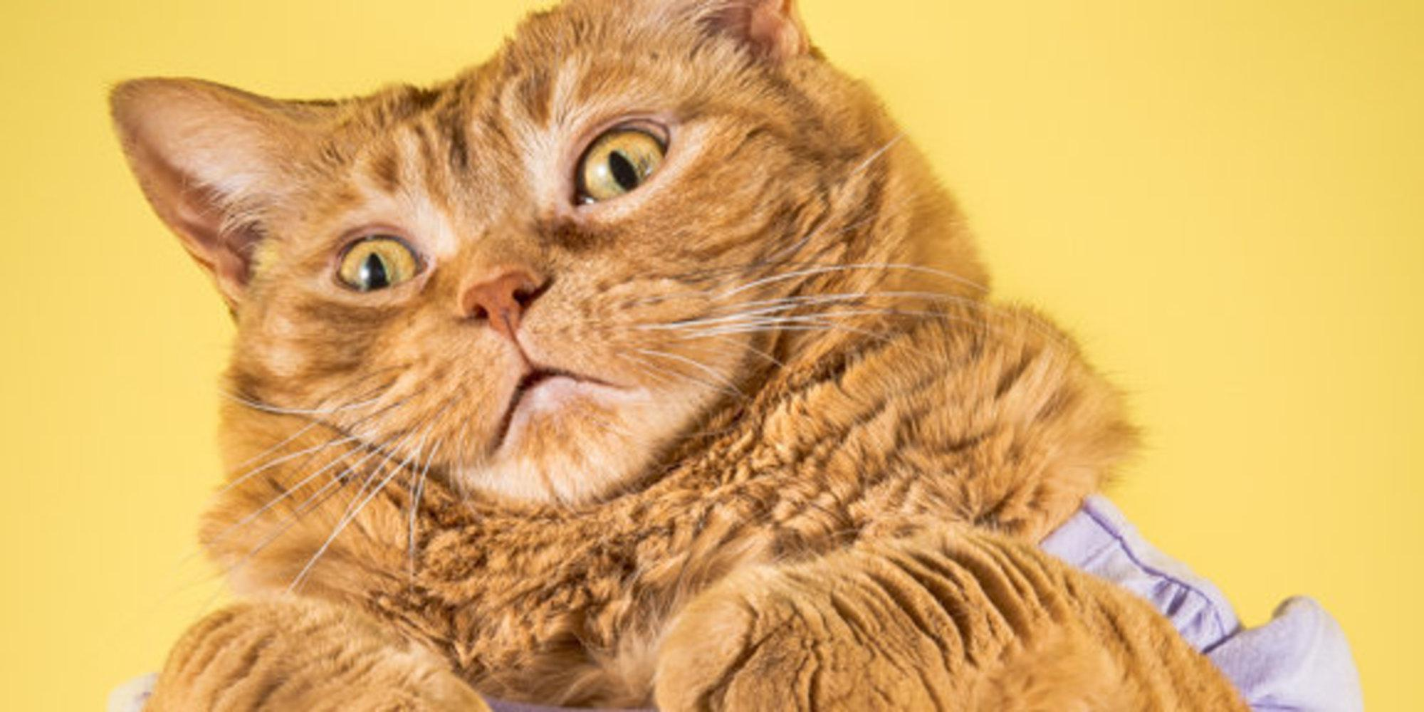 Photographer S Photos Of Adorably Plump Cats Are So Full