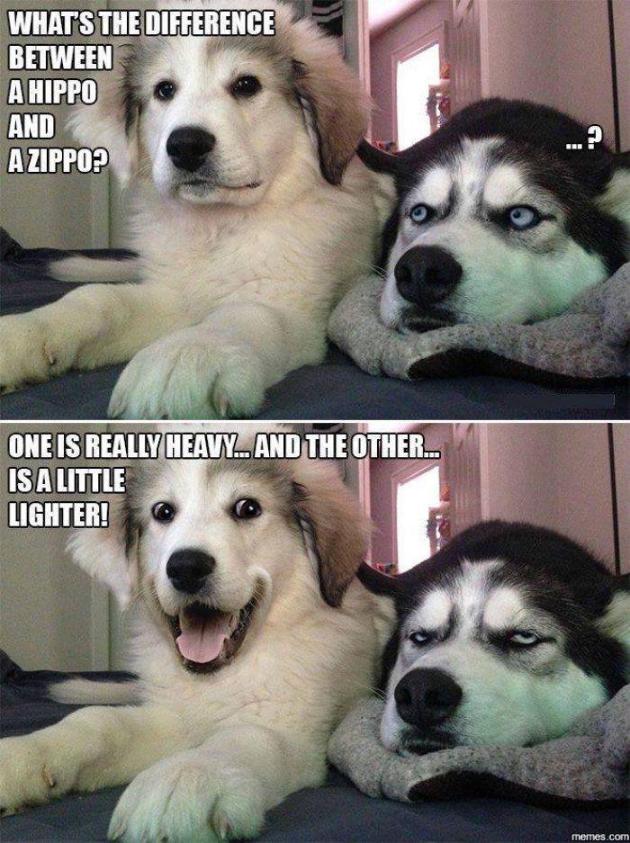 Stupid Adult Jokes 34