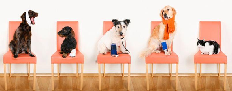 Быстро и качественно провели процедуры по оказанию первой помощи и лечение при энтерите, в результате чего спасли жизнь щенка.