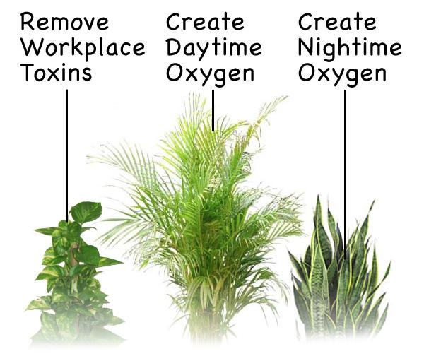 Top three oxygen producing plants for Oxygen plants for home