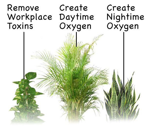 Top three oxygen producing plants for Oxygen plant