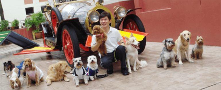 Waggies Dog Training
