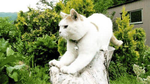 Гифка кошка точит когти пилкой, февраля своими