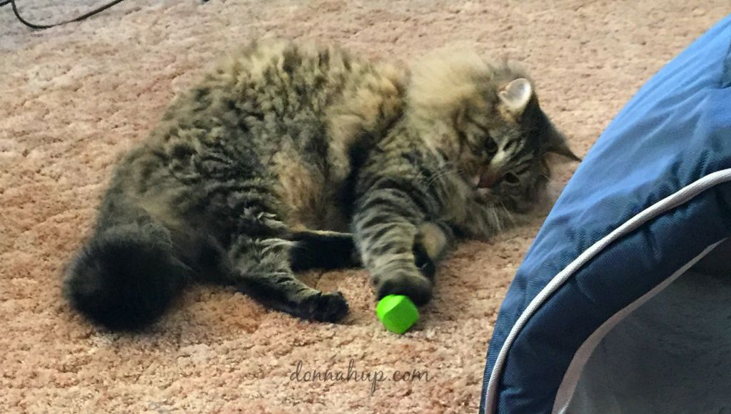 Jackson galaxy cat toys keep my cat entertained for Jackson cat toys