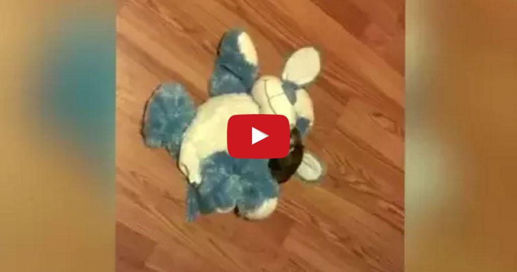 Ferret Toy Dog